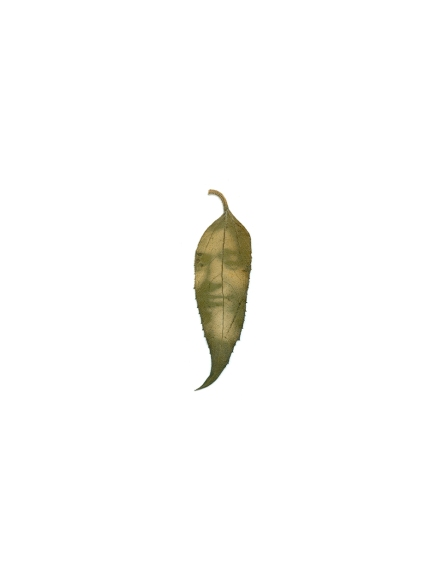 Márcia, revelação de fotografia em fitotipo em folha de girassol, 32x24cm, 2012